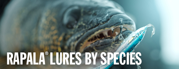 Rapala Lures By Species