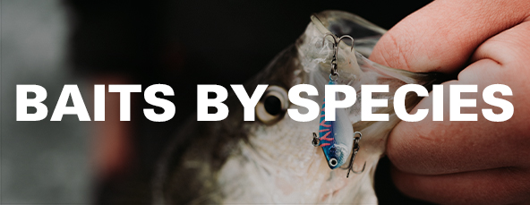 13 Fishing Baits By Species