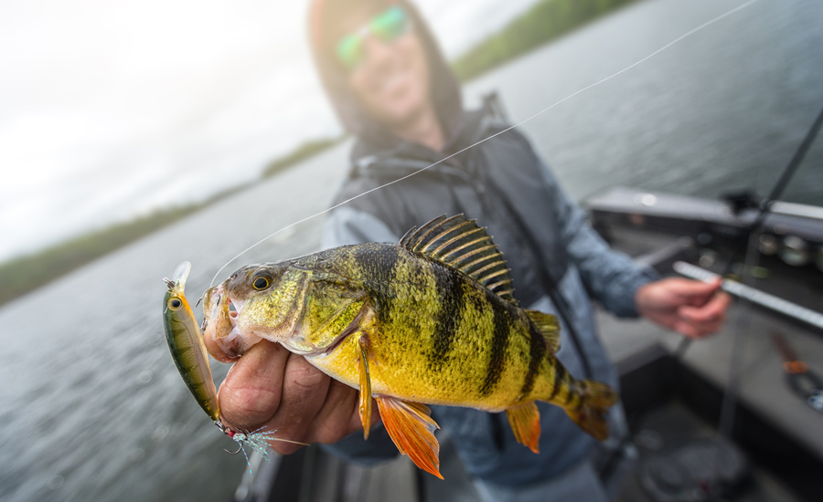 Spring Perch Locations & Tactics