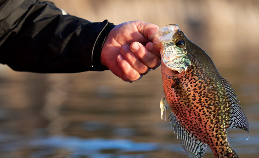 Gearing Up For Fall Crappie